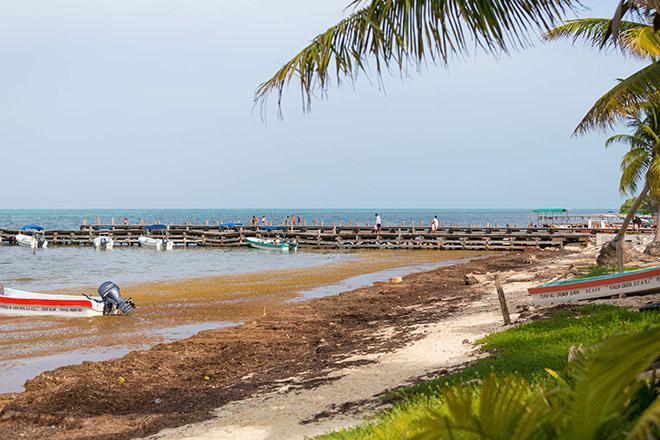 Водоросли мешают отдыхающим на пляжах Карибского побережья