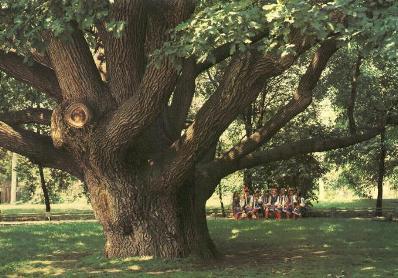 Деревья, которые сводят туристов с ума