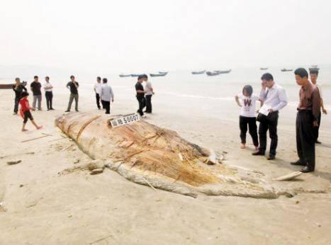 На китайский пляж выкинуло огромного монстра
