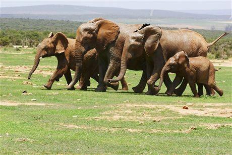 Там, где слоны танцуют под дождем