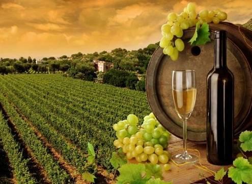 Где лучше всего делают вино: Топ-10 самых «винных» стран мира