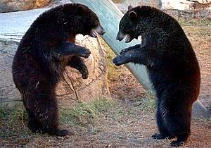 Про медведей которые охраняли марихуану сорта конопли википедия
