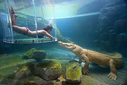 Клетка с туристами упала в резервуар к крокодилам
