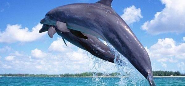 В Сингапуре откроется самый большой в мире океанариум