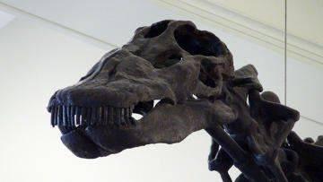 В Италии обнаружен скелет мезозавра, возраст которого составляет  75 млн лет.