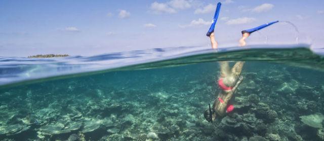 Подводная жизнь в Maafushivaru Maldives