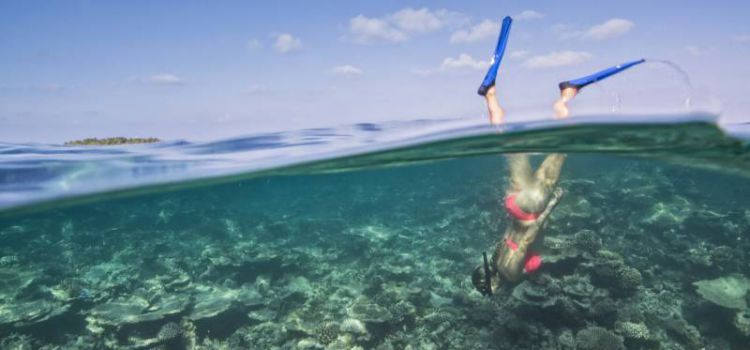 Подводные приключения на курорте Maafushivaru Maldives