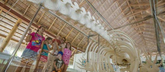 Kuramathi Island Resort – обширная экспозиция островного музея