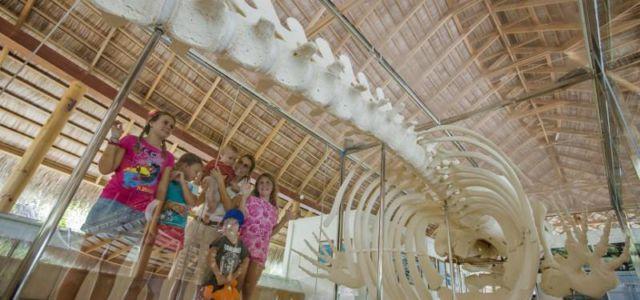 Kuramathi Island Resort — обширная экспозиция островного музея