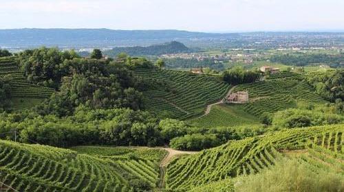 Сельское хозяйство в Италии