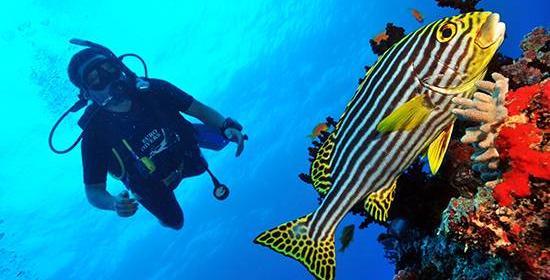 В поисках Немо в Dhigali Maldives