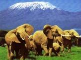Кения будет развивать новые виды туризма и ждет прямых рейсов в Россию