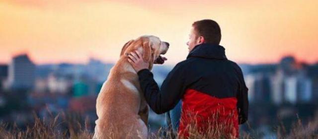 Собаки могут испытывать стресс вместе с хозяевами