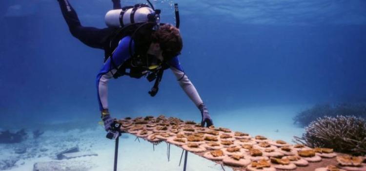 В Доминиканской Республике откроют Живой музей моря