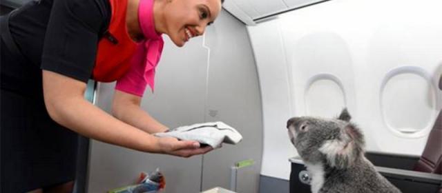 ТОП Самых абсурдных, нелепых и необычных просьб пассажиров