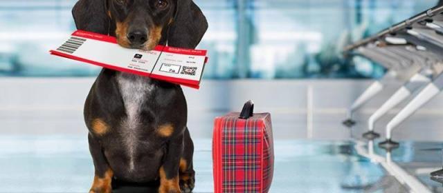 Как правильно путешествовать с животными воздушным транспортом