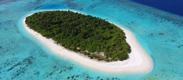 Маленькая черепашка бисса родилась на Faarufushi
