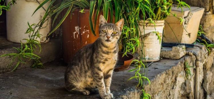 Пять мест в Европе, где кошек больше чем людей